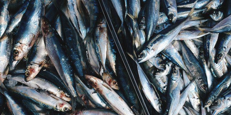 Lunch tip: Sandwich makreel